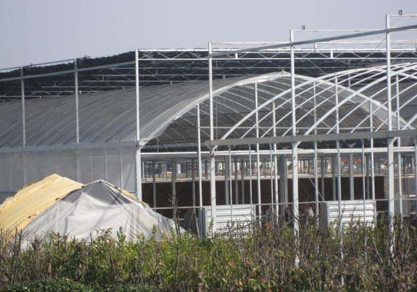 鋼結構溫室大棚9.jpg