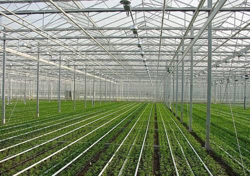 钢结构温室大棚工程5.jpg